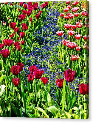 Spring Flowers Impression Canvas Print by Olivier Le Queinec