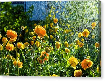 Spring Flowers In The Rain Canvas Print