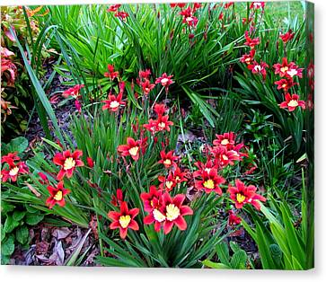 Spring Flowers Canvas Print by Joyce Woodhouse