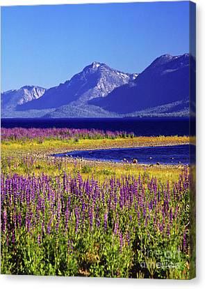 Spring Flowers Lake Tahoe Canvas Print by Vance Fox