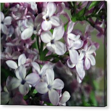 Spring Flowers Canvas Print by Mikki Cucuzzo
