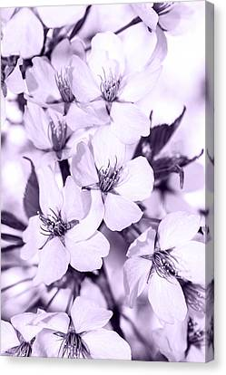 Spring Flowers On Branch Canvas Print by Tommytechno Sweden
