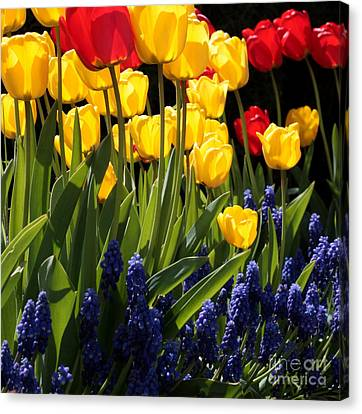 Spring Flowers Square Canvas Print by Carol Groenen