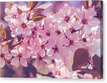 Spring Flowers Canvas Print by Thubakabra
