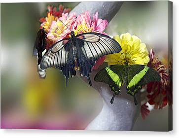 Blossom Canvas Print - Spring Flowers With Butterflies by Art Spectrum