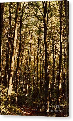 Canvas Print featuring the photograph Spring Forest by Jean Bernard Roussilhe