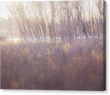 Spring Frost Canvas Print