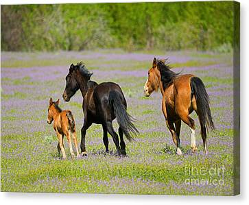 Spring Gallop Canvas Print by Mike Dawson