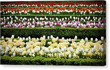 Canvas Print featuring the photograph Spring Garden - Colorful Tulips by Frank Tschakert