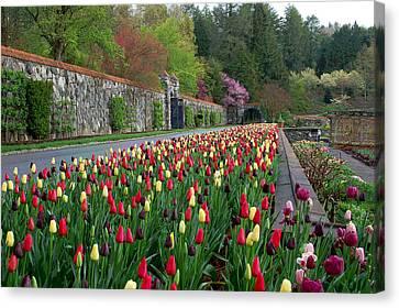 Spring Garden View IIi Canvas Print