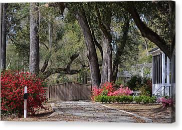 Spring Gate Canvas Print by Linda Brown