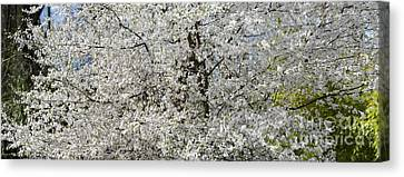 Spring Glory Canvas Print by Tim Gainey