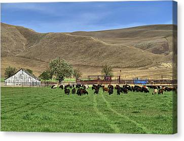 Canvas Print featuring the photograph Spring Grazing by Donna Kennedy