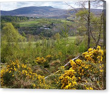 Spring Green - Ballindalloch Canvas Print by Phil Banks