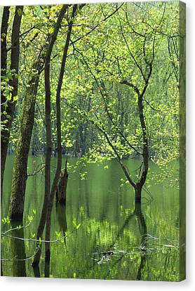 Spring Green  Canvas Print by Lori Frisch