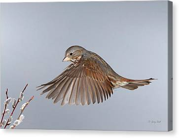 Canvas Print featuring the photograph Spring Has Sprung by Gerry Sibell