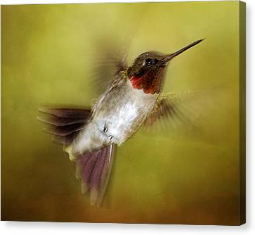 Spring Hummingbird Canvas Print by TnBackroadsPhotos