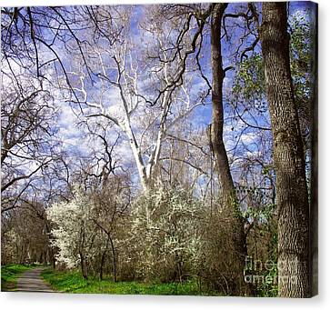 Spring In Bidwell Park Canvas Print