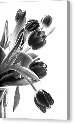 Greyscale Canvas Print - Spring In Black And White by Maggie Terlecki