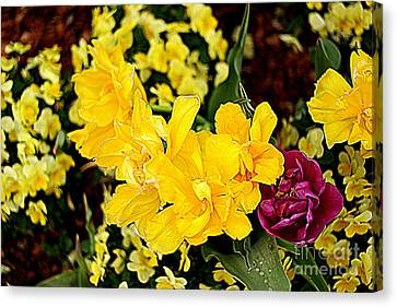 Canvas Print featuring the photograph Spring In Dallas by Diana Mary Sharpton