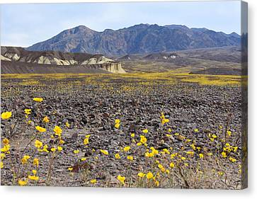 Canvas Print featuring the photograph Spring In Death Valley by Dung Ma