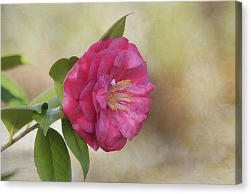 Spring In Savannah Canvas Print by Kim Hojnacki