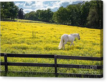 Spring In Tennessee Canvas Print by Bob Hemphill