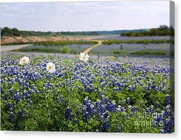 Spring In The Hill Country Canvas Print