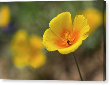 Canvas Print featuring the photograph Spring Is Beckoning  by Saija Lehtonen