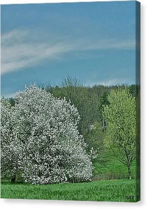 Spring Is Here Canvas Print by Debra     Vatalaro