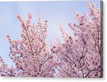 Canvas Print featuring the photograph Spring Is In The Air by Ana V Ramirez