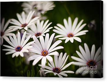 Canvas Print featuring the photograph Spring Is In The Air by Kelly Wade