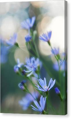Spring Canvas Print by Kate Livingston