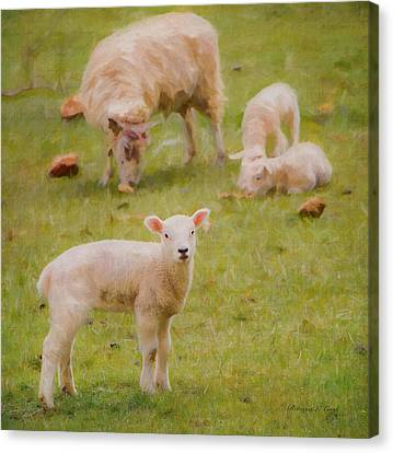 Canvas Print featuring the photograph Spring Lamb by Bellesouth Studio