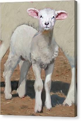 Spring Lamb Canvas Print by John Reynolds
