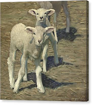 Spring Lambs Brothers Canvas Print by John Reynolds