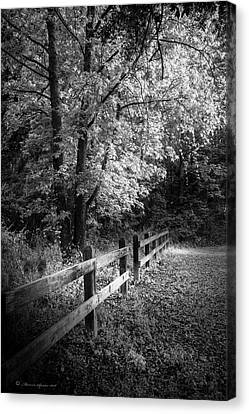 Spring Leaves B/w Canvas Print by Marvin Spates