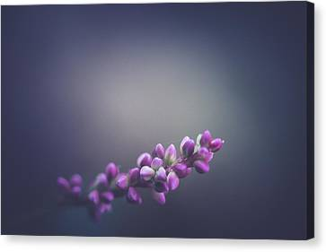 Spring Lights  Canvas Print by Shane Holsclaw