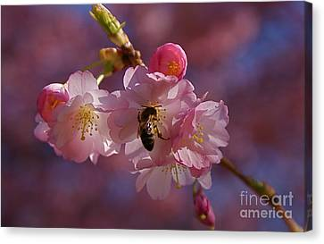Canvas Print featuring the photograph Spring by Louise Fahy