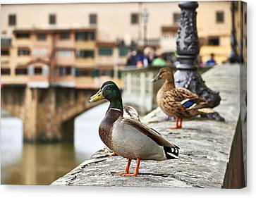 Spring Love Ducks Canvas Print