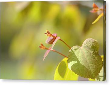 Canvas Print featuring the photograph Spring Macro2 by Jeff Burgess