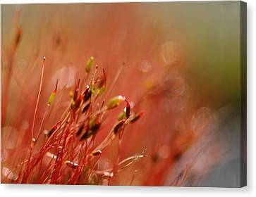 Canvas Print featuring the photograph Spring Macro3 by Jeff Burgess