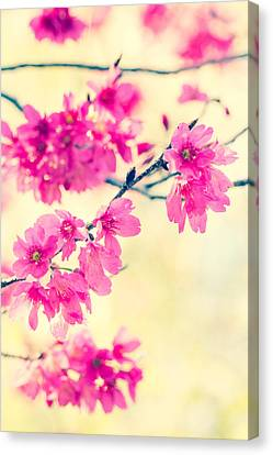 Canvas Print featuring the photograph Spring Magic by Julie Andel