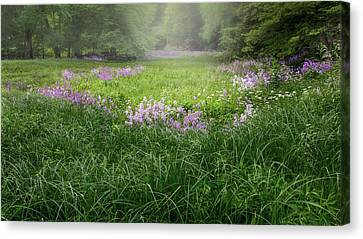 Spring Meadow 2016 Canvas Print by Bill Wakeley