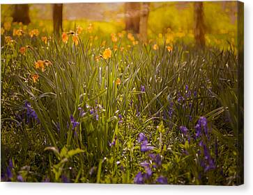 Spring Meadow Canvas Print by Chris Fletcher