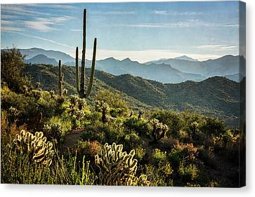 Canvas Print featuring the photograph Spring Morning In The Sonoran  by Saija Lehtonen