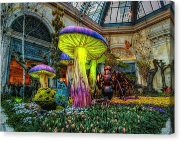 Frog Canvas Print - Spring Mushrooms by Stephen Campbell