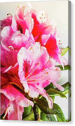 Spring Of Flower Bouquets Canvas Print