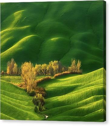 Spring On Fields... Canvas Print by Krzysztof Browko