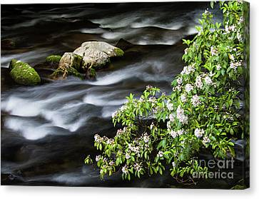 Canvas Print featuring the photograph Spring On The Oconaluftee River - D009923 by Daniel Dempster